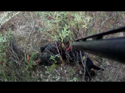 action de chasse en corse