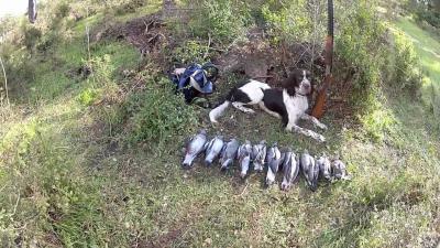 chasse au cerf en corse