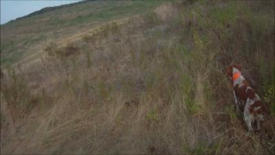chasse au faisan en corse