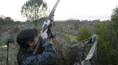 chasse au pigeon en haute corse