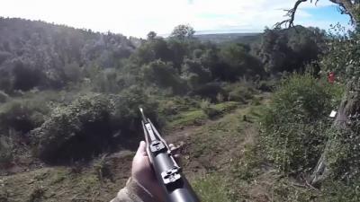 chasse au sanglier en battue corse