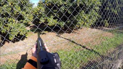 chasse au sanglier en corse 2016