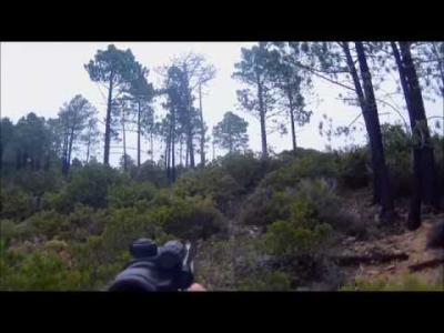chasse au sanglier en corse du sud 2015