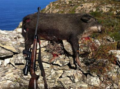 chasse corse.com