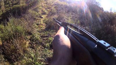 chasse en corse au sanglier 2013