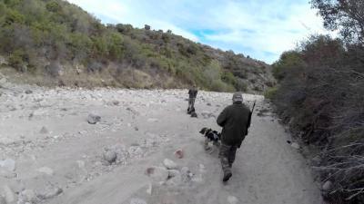 chasse en corse au sanglier 2015