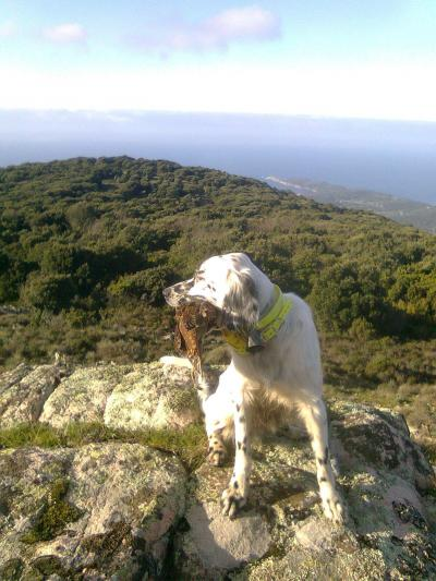 chasse en corse becasse