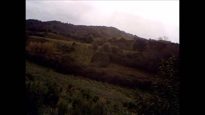 chasse grives corse sud 2015