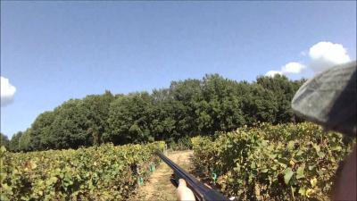 chasse grives corse sud