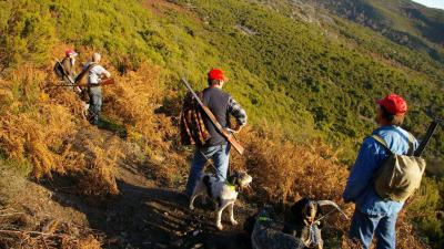 chasse organisee en corse
