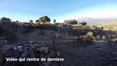 chasse palombe en corse 2014