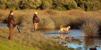 chasse perdrix rouge en corse