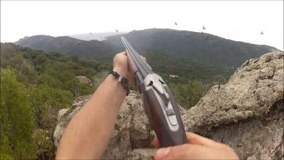 chasse pigeon corse du sud