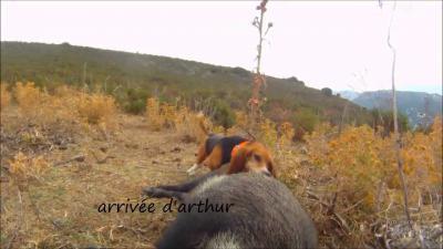 chasse sanglier en corse 2013