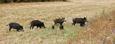 domaine de chasse en corse du sud