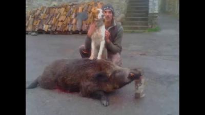la chasse en corse du sud