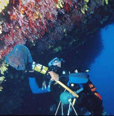 peche corail corse
