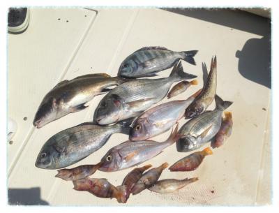 peche poisson corse