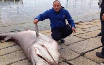 peche requin corse