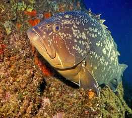peche sous marine en corse reglementation