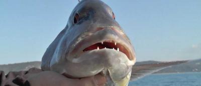 poisson a chasser en corse